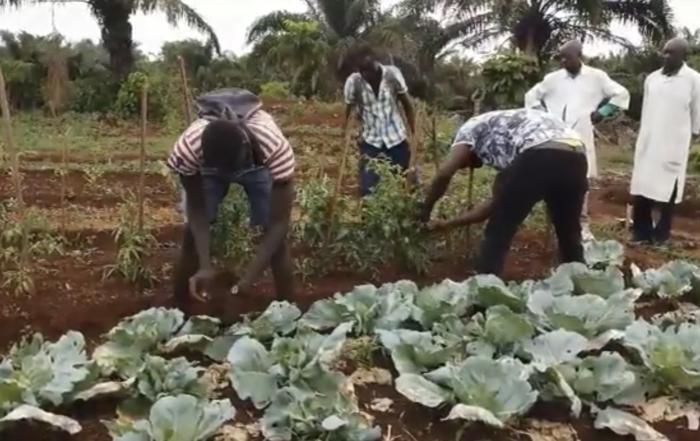 scuola agricola bangui